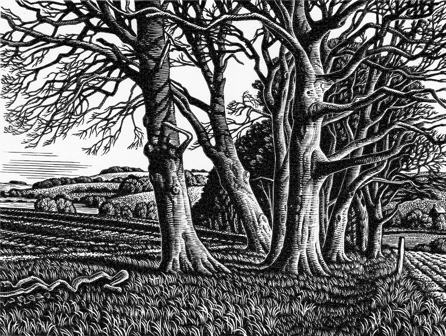 Clearbury Ring from Homington Down by Howard Phipps