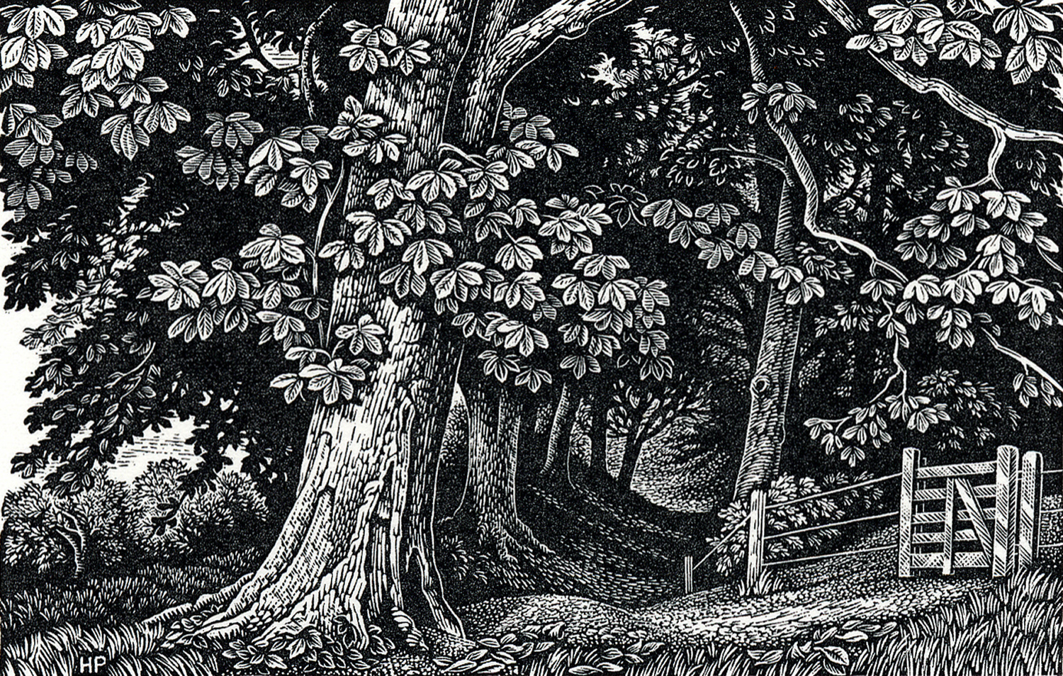 Edge of the Wood, Broadchalke by Howard Phipps