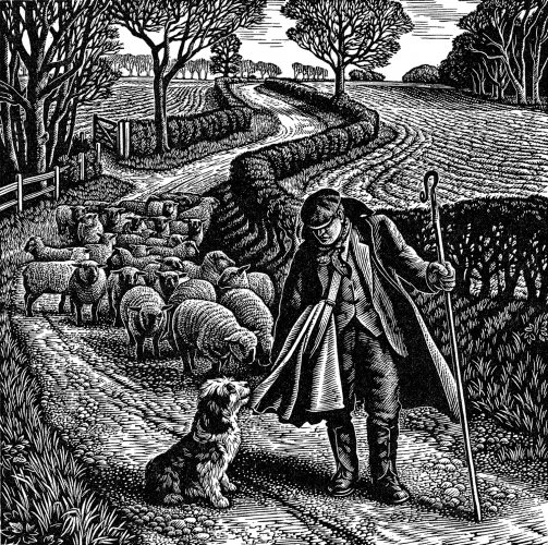 Suffolk Shepherd