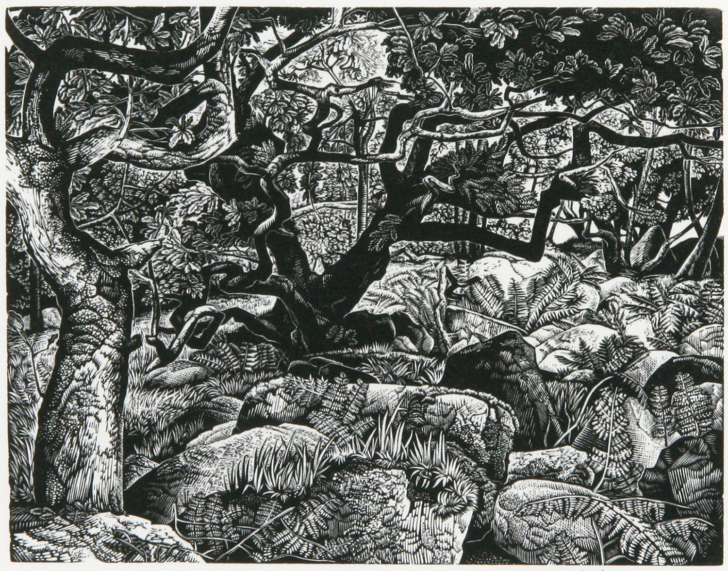 Wistman's Wood by Howard Phipps