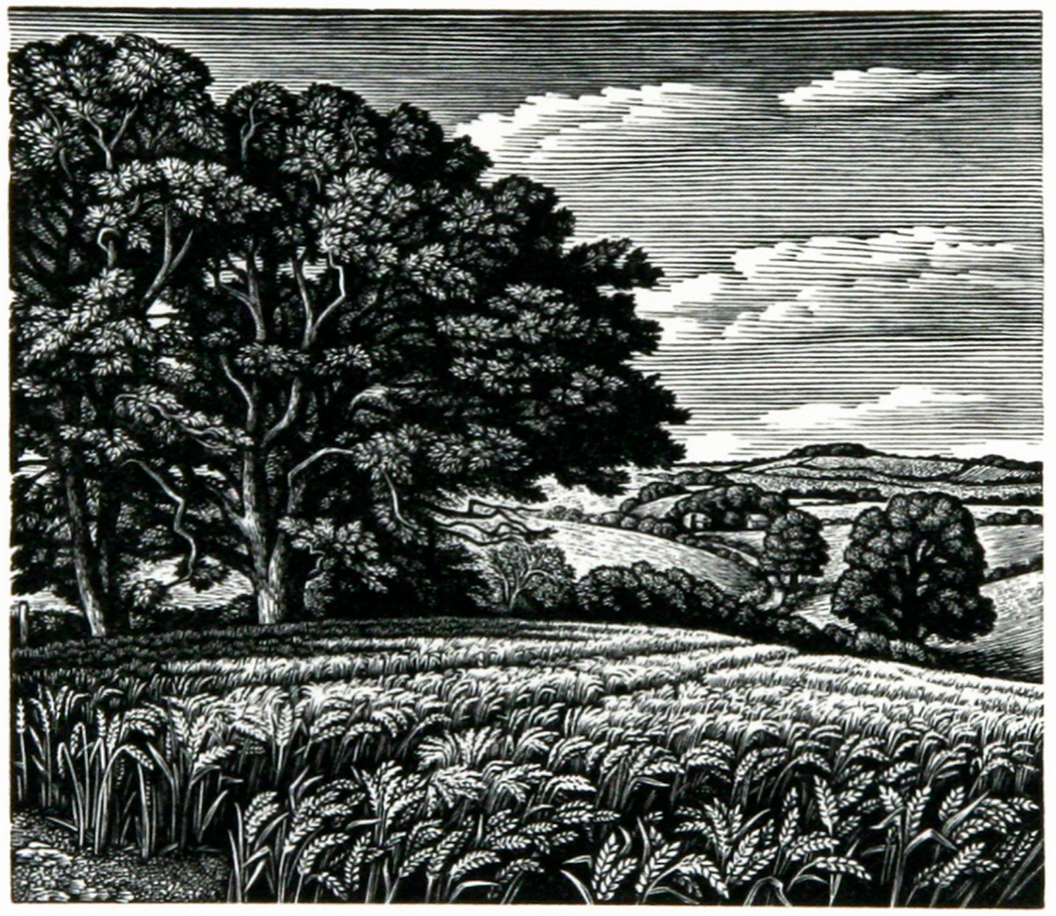 Clearbury Ring from Tower House Meadow by Howard Phipps
