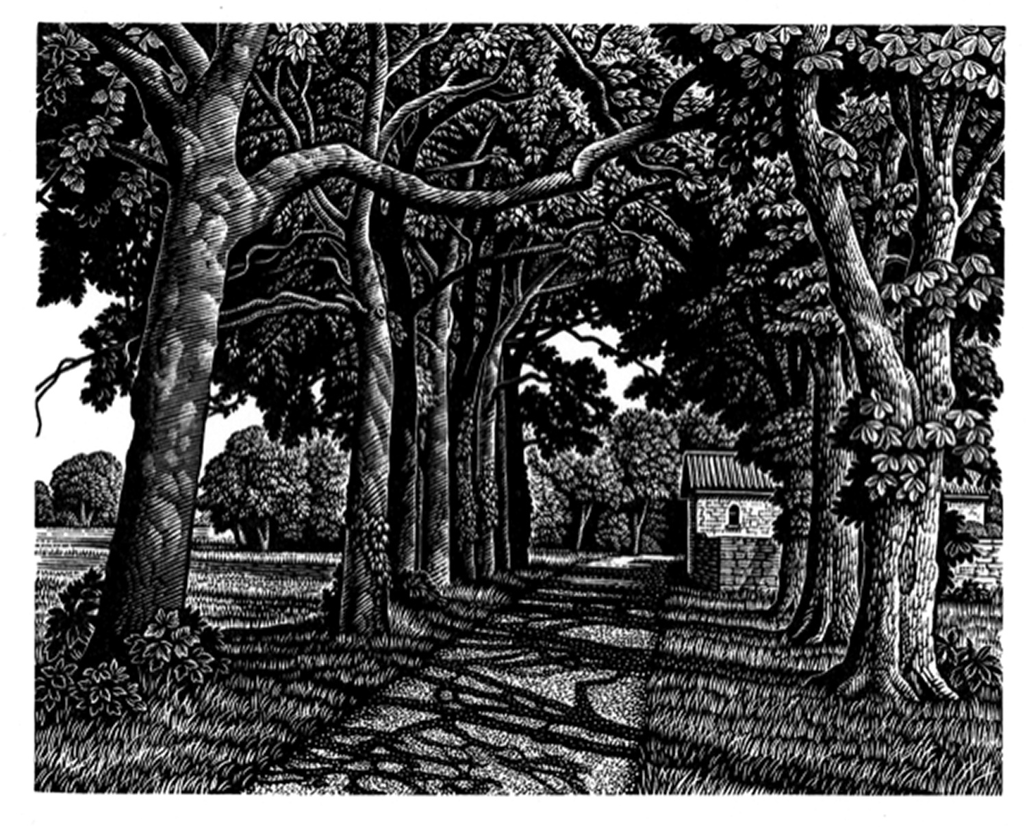 Avenue of Trees in Summer by Howard Phipps