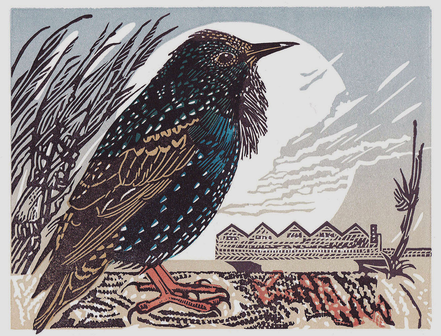 Starling by Pam Grimmond