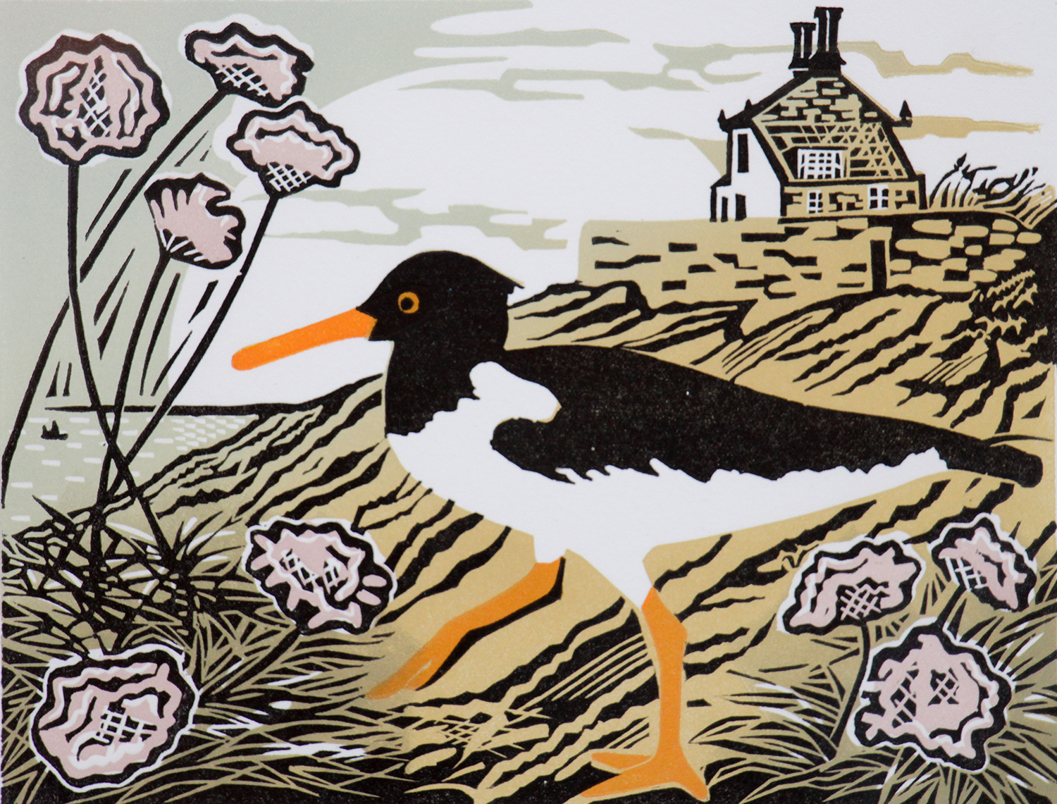Oystercatcher by Pam Grimmond
