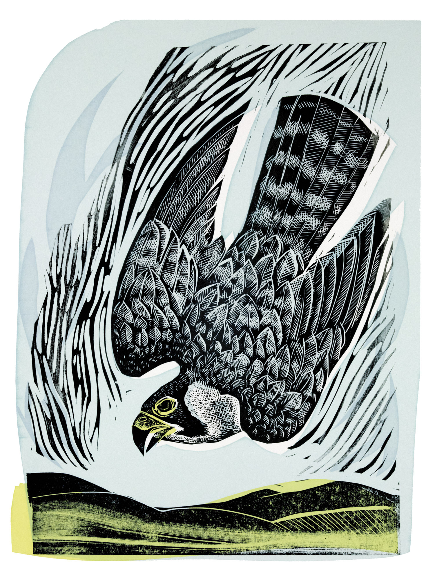 Diving Falcon by Angela Harding