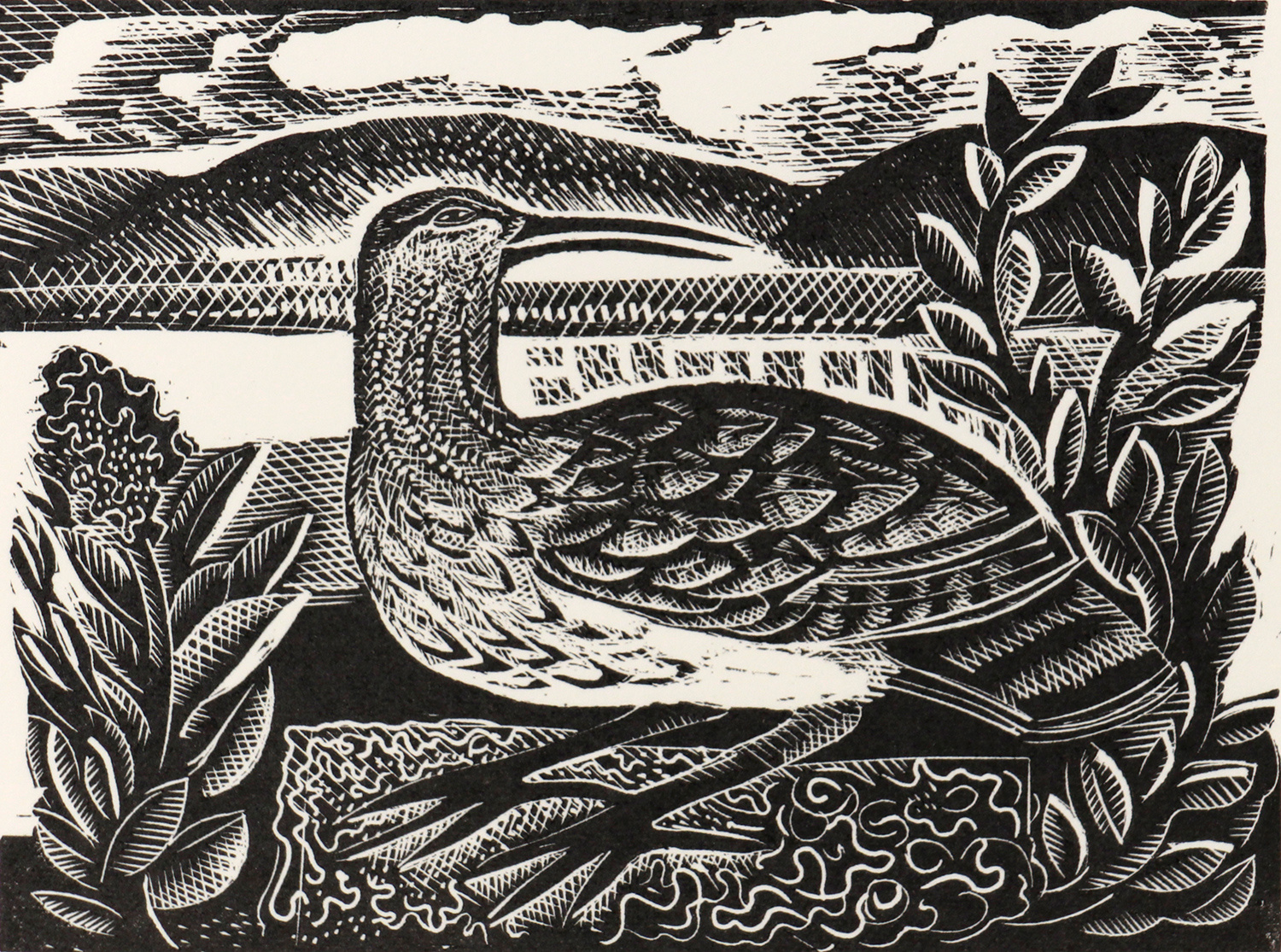 W is for Whimbrel by Angela Harding