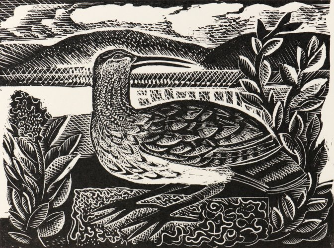 W is for Whimbrel