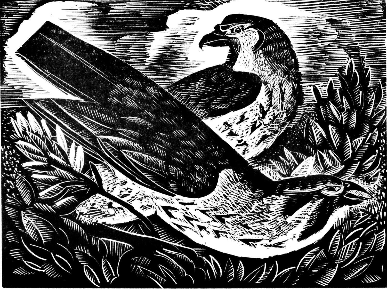 F is for falcon by Angela Harding