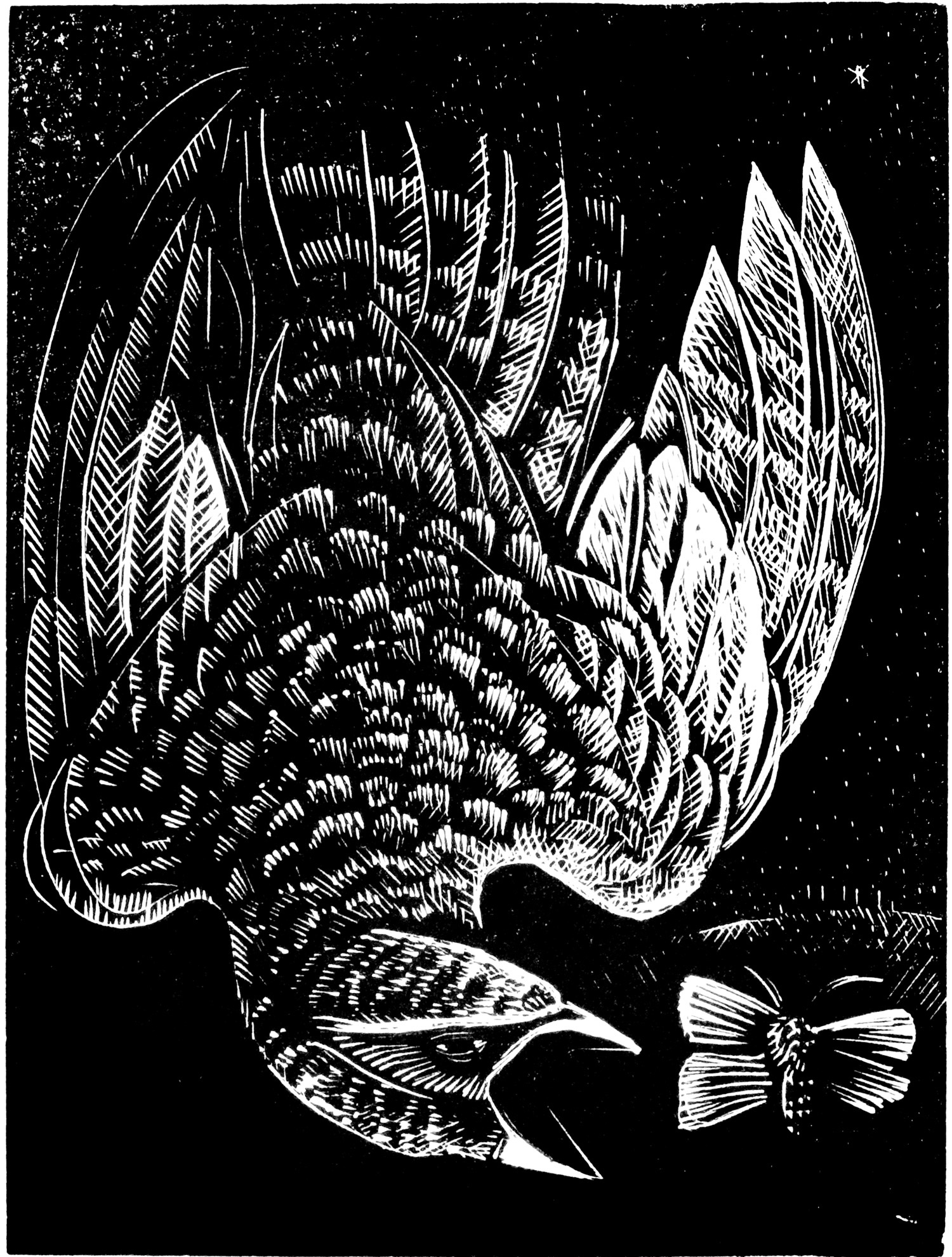 N is for Nightjar by Angela Harding