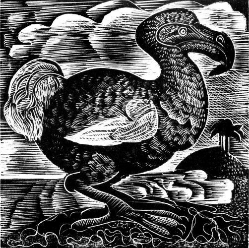 X is for Dodo