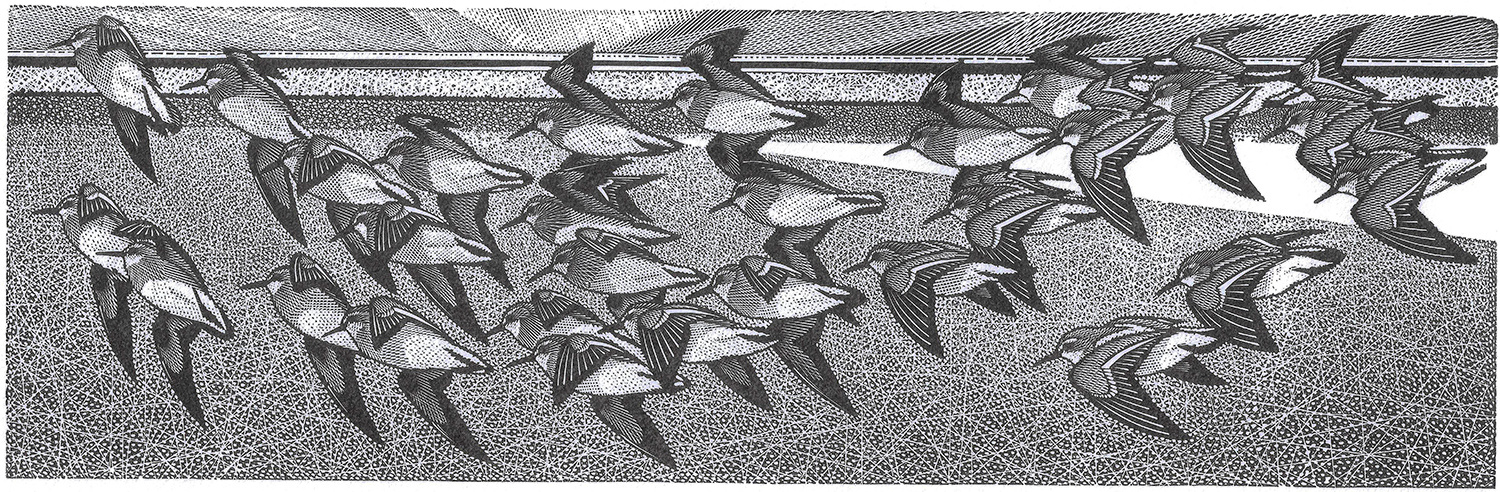 Sandpiper Party by Colin See-Paynton