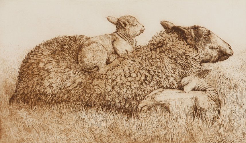 Sheep & Lambs (on back)