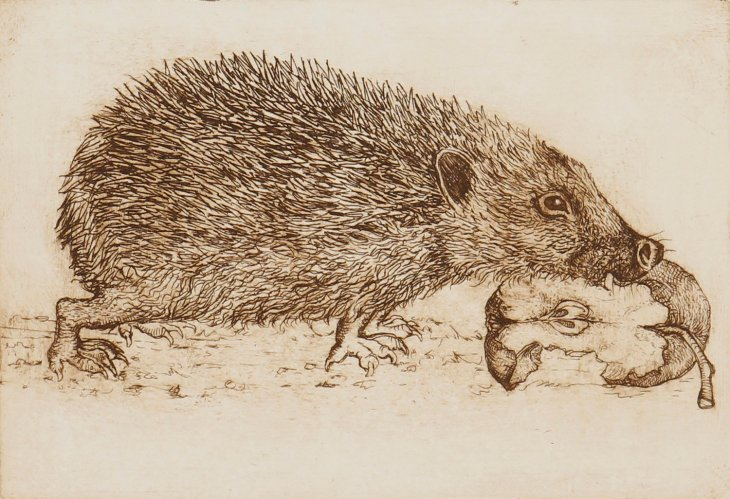 Hedgehog & Apple