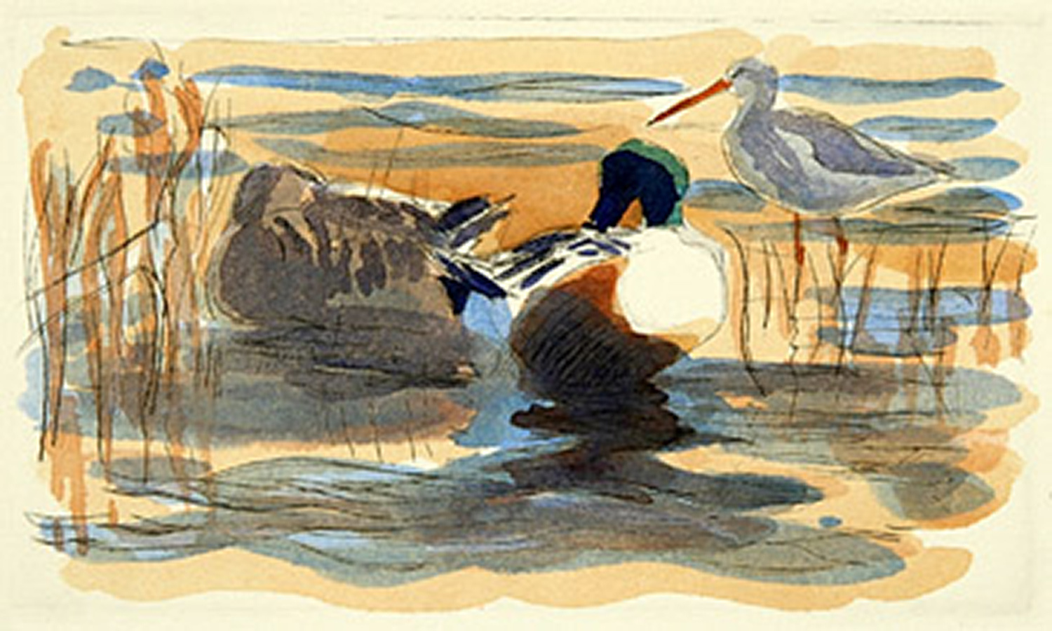 Shovelers & Spotted Redshank by Robert Greenhalf