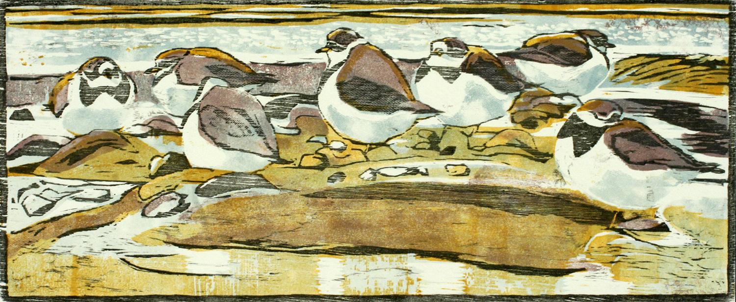 Ringed Plovers by Robert Greenhalf