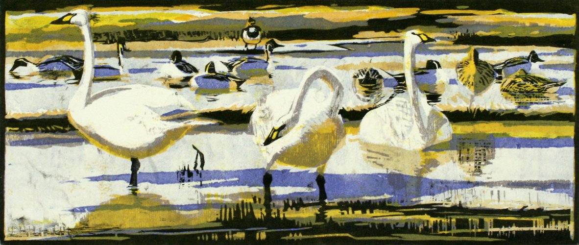 Bewick's Swans & Pintails