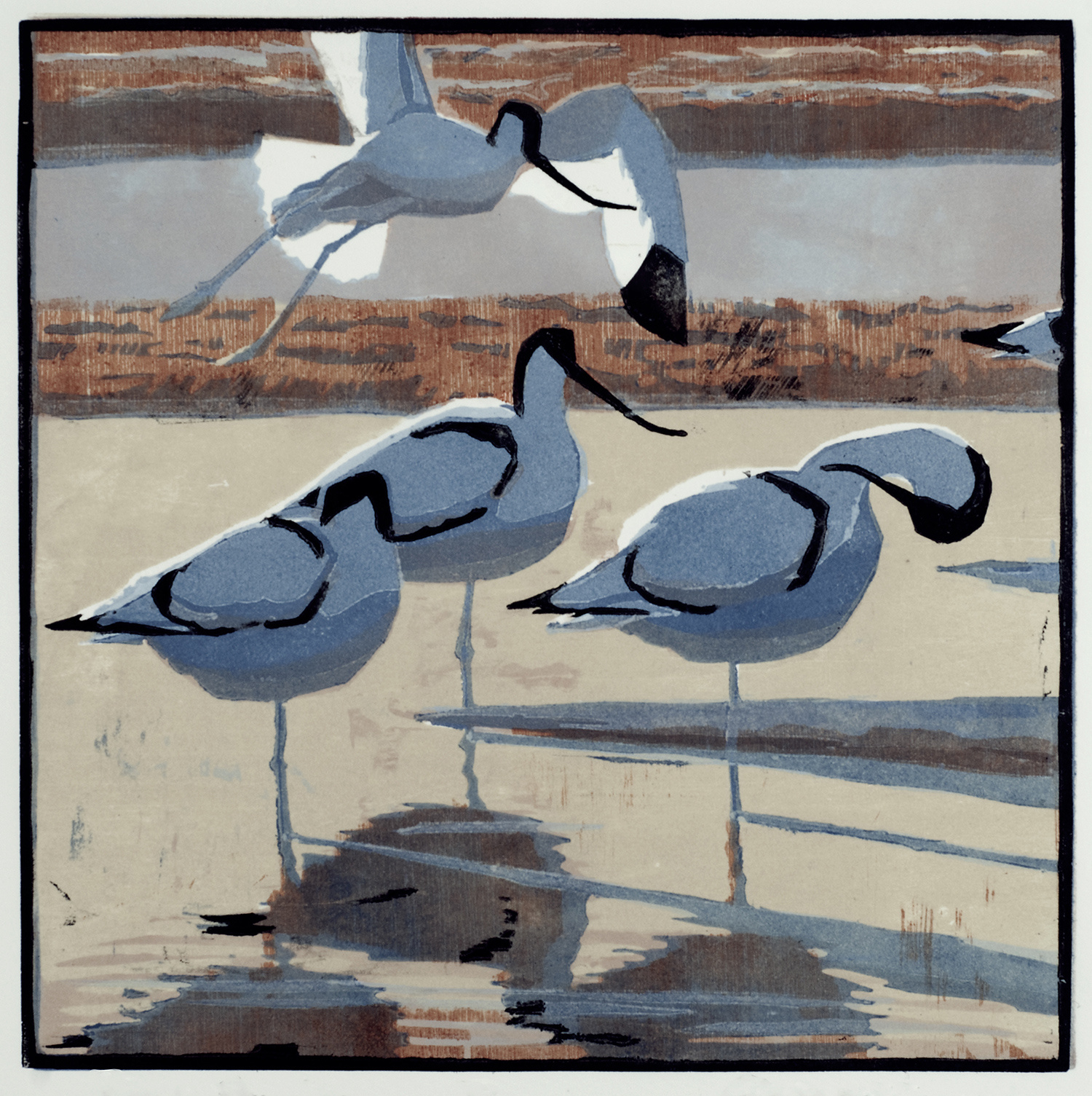 Four Avocets by Robert Greenhalf