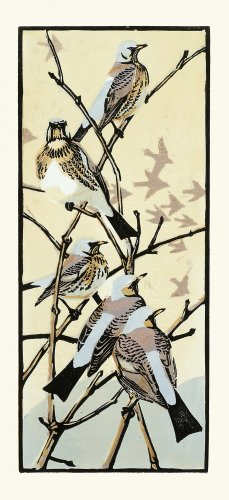 Image of Winter Thrushes