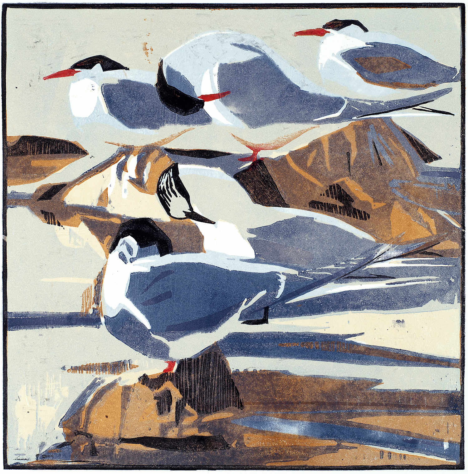 Arctic Terns by Robert Greenhalf