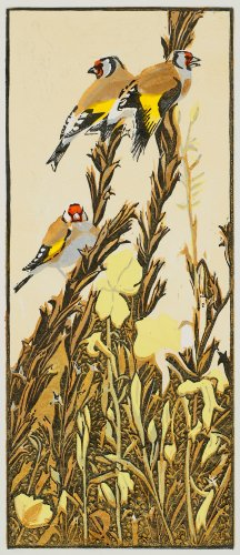 Goldfinches & Evening Primroses