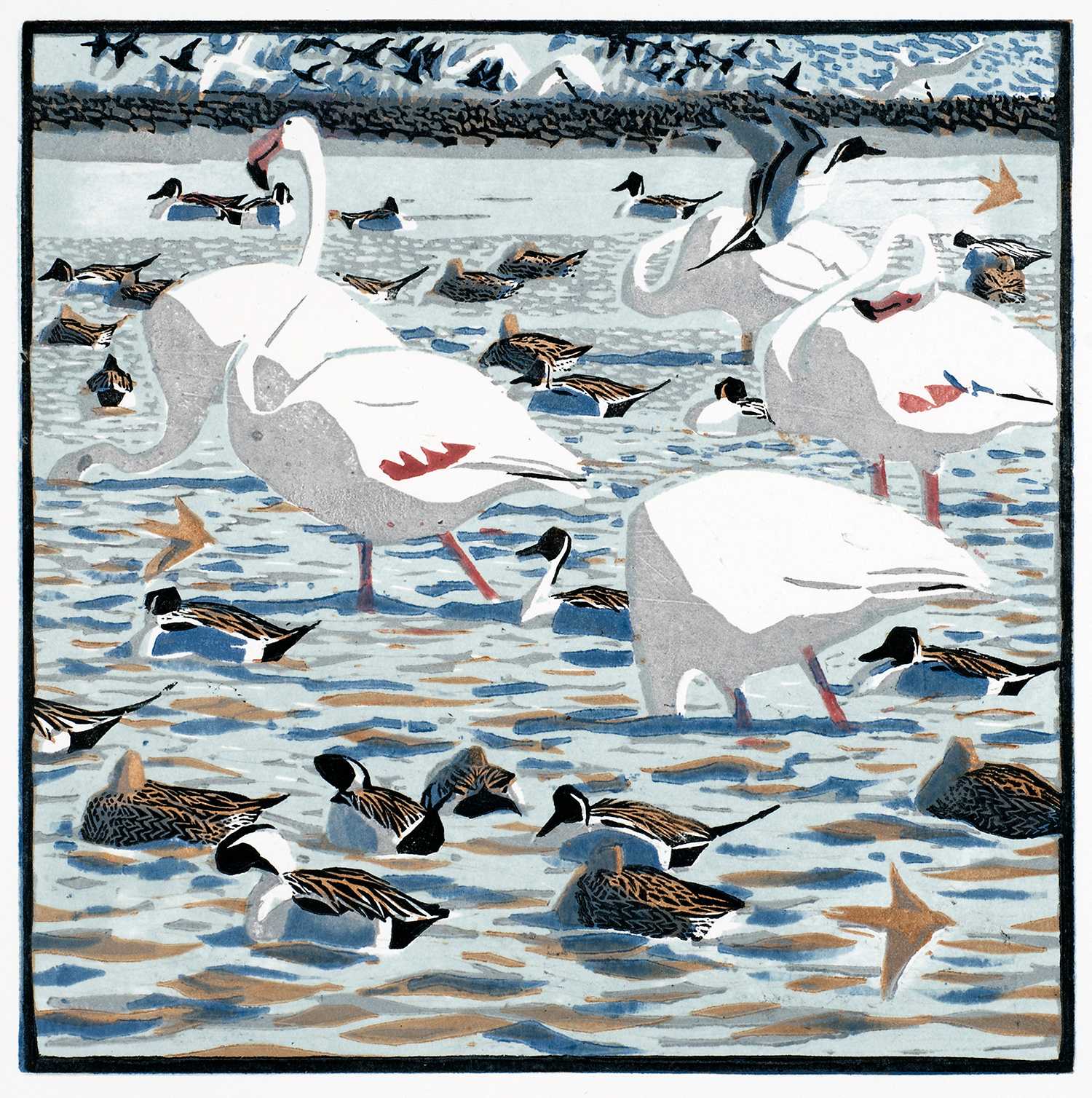 Flamingos & Pintails by Robert Greenhalf