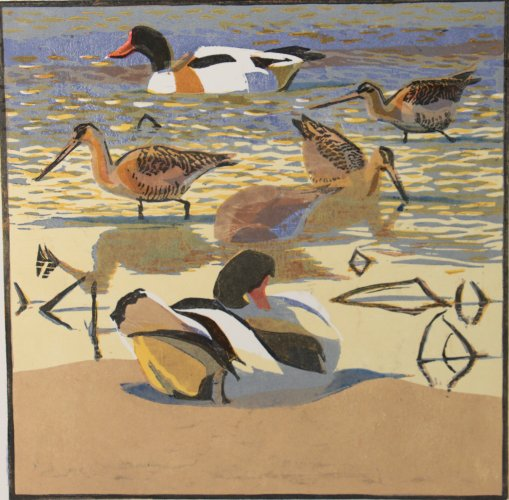 Shelducks & Godwits