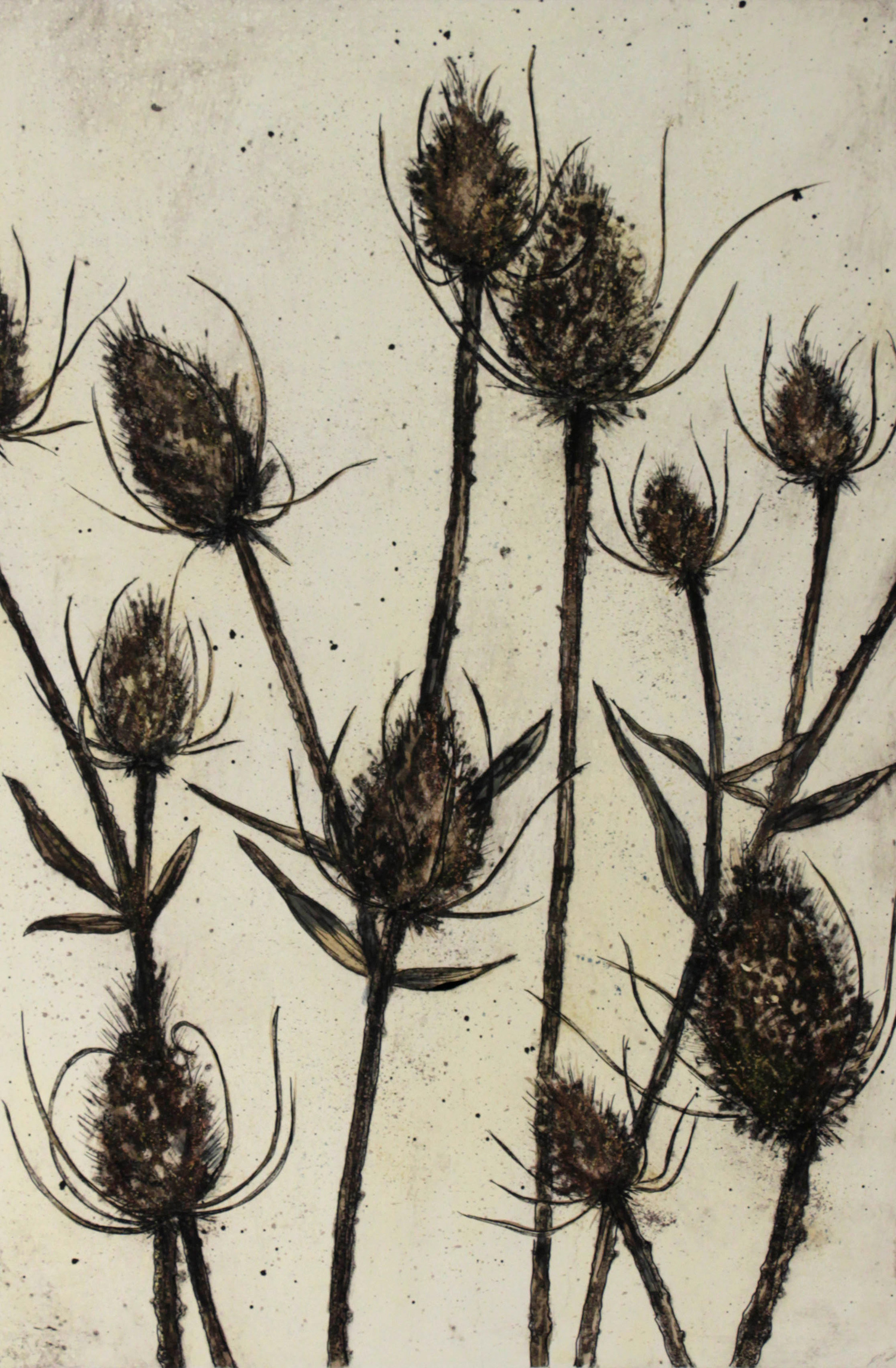 Teasels by Vicky Oldfield