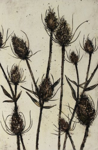 Image of Teasels